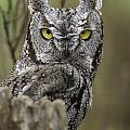 Screen Owl by Michael Goodell