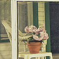 Screened Porch by Margie Hurwich