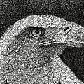 Scribble Eagle by Nathan Shegrud