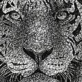 Scribble Tiger by Nathan Shegrud