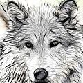 Scrimshaw Grey Wolf by Steve McKinzie