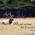 Scripture Photo With Elk Sitting by Jill Lang