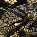 Scrub Python Abstraction by Sara  Raber