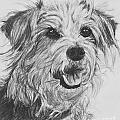 Scruffy Terrier Dog Drawing by Kate Sumners