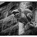 Sculpted Frog - Art Unexpected by Tom Mc Nemar