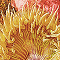 Sea Anenome Stretch by Artist and Photographer Laura Wrede