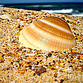 Sea Beyond The Shell by Kaye Menner