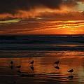 Sea Birds  Leucadia Ca  2013 by Alfredo Martinez