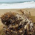 Sea Creature by Danica Stewart