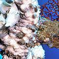 Sea Cucumbers 1 by Dawn Eshelman