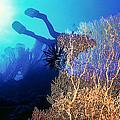 Sea Fans 2 by Dawn Eshelman