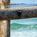 Sea Gate by Susan Garren