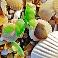 Sea Glass And Shells 17 10/2 by Mark Lemmon