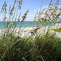 Sea Grass by Ginny Schmidt