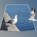 Sea Gull Away Out Of Bounds by Thomas Woolworth