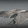 Sea Gull by Bren Thompson