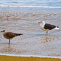 Sea Gull Pair by Donna Shaw