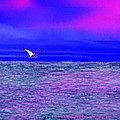 Sea. Last Rays Of Sun by Dr Loifer Vladimir