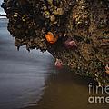 Sea Life by Gene Garnace