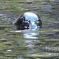 Sea Lion 2 by Brandi Moore