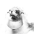 Sea Lion Abstract by TN Fairey