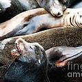 Sea Lion Dreams by Gwyn Newcombe
