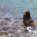 Sea Lion Smile by Dale Nelson