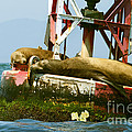 Sea Lions Floating On A Buoy In The Pacific Ocean In Dana Point Harbor by Artist and Photographer Laura Wrede
