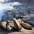 Sea Lions Seek Shelter by Eric Johansen
