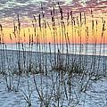 Sea Oat Sunrise by JC Findley