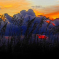 Sea Oat Sunset by David Lee Thompson