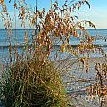 Sea Oats 1 by Nancy L Marshall