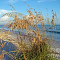 Sea Oats 2 by Nancy L Marshall