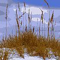 Sea Oats Agaist A Blue Sky by Laurie Pike