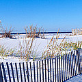 Sea Oats And Fence Along White Sand by Panoramic Images