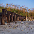Sea Oats And Pilings by E Karl Braun