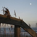 Sea Oats And Wooden Railing by MM Anderson
