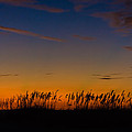 Sea Oats At Twilight by Ed Gleichman