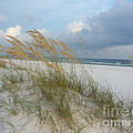 Sea Oats  Blowing In The Wind by Michelle Powell