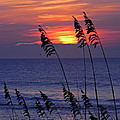 Sea Oats By The Sea by Amber Ruth
