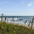 Sea Oats Obx by Sandy Banks Photography