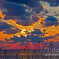 Sea Oats Silhouette by Stephen Whalen