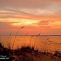 Sea Oats Sunset  by Mark Olshefski