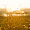 Sea Oats Sunset by Sebastian Musial