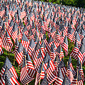 Sea Of Flags by Inge Johnsson