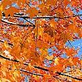Sea Of Orange And Blue by Elizabeth Dow