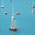 Sea Of Sailboats by Aimee L Maher ALM GALLERY