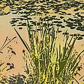 Sea Plants Abstract