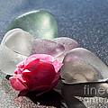 Sea Rose by Barbara McMahon