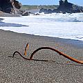 Sea Serpent by Christina McKinney